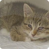 Adopt A Pet :: GEORGINA'13 - New York, NY