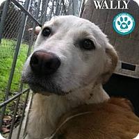 Adopt A Pet :: Wally - Kimberton, PA