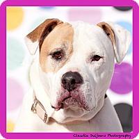 Adopt A Pet :: Chloe - Long Beach, NY