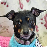 Adopt A Pet :: Chewy - Huntley, IL