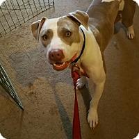 Adopt A Pet :: Cinderella - Lodi, CA