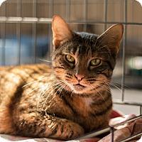 Adopt A Pet :: Gisele - Daleville, AL