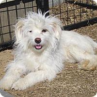 Adopt A Pet :: BELLA JOY - Bedminster, NJ