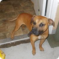 Adopt A Pet :: Jefferson - Lewisburg, TN
