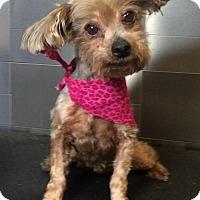 Adopt A Pet :: Maven - McKinney, TX