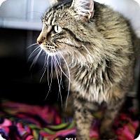 Adopt A Pet :: Bell - Appleton, WI