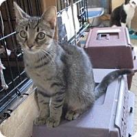 Adopt A Pet :: JASON - detroit, MI