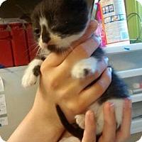 Adopt A Pet :: Maude - Neenah, WI