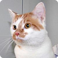 Adopt A Pet :: Goober - Wildomar, CA