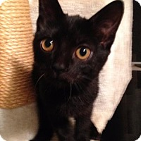 Adopt A Pet :: Langley - St Paul, MN