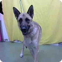Shepherd (Unknown Type) Mix Dog for adoption in San Bernardino, California - URGENT 11/29 @ DEVORE
