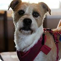 Adopt A Pet :: Bella aka Canela - Antioch, CA