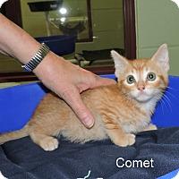 Adopt A Pet :: Comet - Slidell, LA