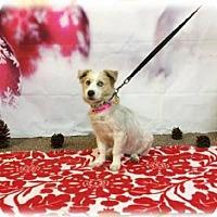 Adopt A Pet :: Cabbage - Pendleton, NY