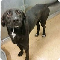 Adopt A Pet :: Dobby - Macomb, IL