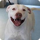 Adopt A Pet :: Dogo
