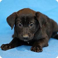 Adopt A Pet :: Arizona - Waldorf, MD