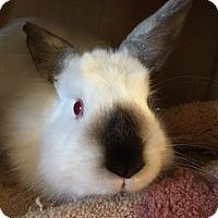 Adopt A Pet :: Bandit - Chula Vista, CA