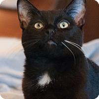Adopt A Pet :: Cinder - Faribault, MN