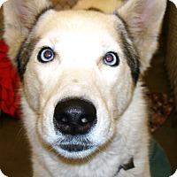 Adopt A Pet :: Balto - Kalamazoo, MI
