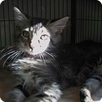 Adopt A Pet :: Frisco - Shelton, WA