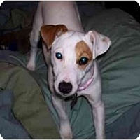 Adopt A Pet :: Daisy in Houston - Houston, TX