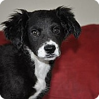 Adopt A Pet :: Nash - Tumwater, WA