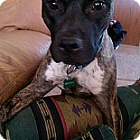 Adopt A Pet :: Hobbs - Phoenix, AZ