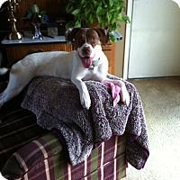 Adopt A Pet :: Gingersnap - North Brunswick, NJ