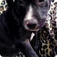 Adopt A Pet :: Henry - PORTLAND, ME
