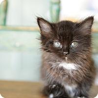 Adopt A Pet :: Arvada - San Antonio, TX