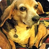 Adopt A Pet :: KEEBLER - Anderson, SC