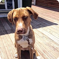 Adopt A Pet :: Hank - Acushnet, MA