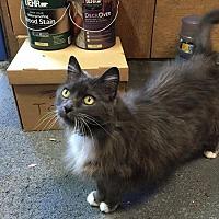 Adopt A Pet :: Sabine - San Jose, CA