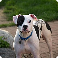 Adopt A Pet :: Petey - Grand Rapids, MI