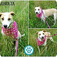 Adopt A Pet :: Magnolia - Kimberton, PA