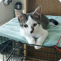 Adopt A Pet :: Timmy - Stafford, VA