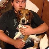 Adopt A Pet :: TJ - cedar grove, IN
