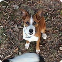 Adopt A Pet :: Buddy - Monroe, NC
