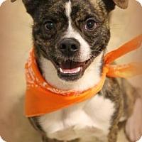 Adopt A Pet :: Super-Dog Stanley - Flagstaff, AZ