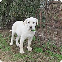 Adopt A Pet :: DALTON - Hartford, CT