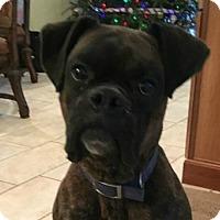 Adopt A Pet :: Vin Diesel - Central & West Florida, FL