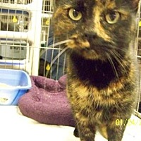 Adopt A Pet :: Valentine - Anderson, IN