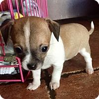 Adopt A Pet :: Carmen (V) - Santa Ana, CA