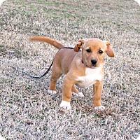 Adopt A Pet :: JULEP - Bedminster, NJ