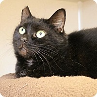 Adopt A Pet :: Venus - East Hartford, CT
