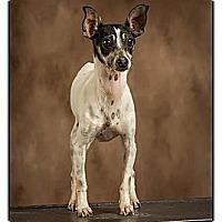 Adopt A Pet :: Fiona - Owensboro, KY