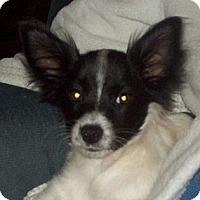 Adopt A Pet :: Jasper - Southport, NC