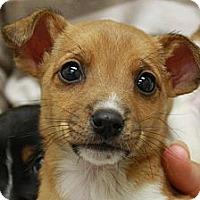 Adopt A Pet :: Francis- adopted - Jackson, MI