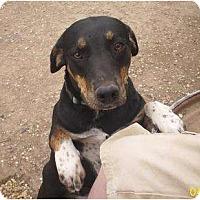 Adopt A Pet :: Hound - Glenpool, OK